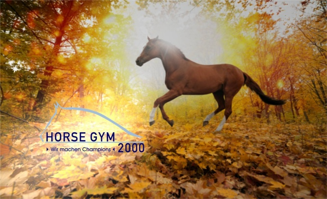 Horse Gym 2000 | Siegfried Mitzel