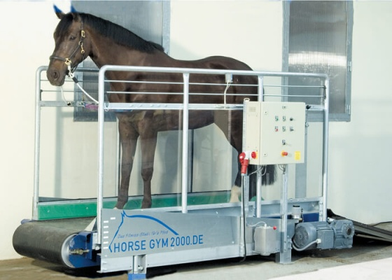 Horse Gym 2000 Walk Treadmill S2