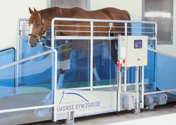 Horse Gym 2000 | Treadmill Study