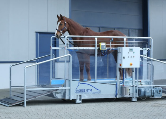 Horse Gym 2000 Walk Treadmill S3