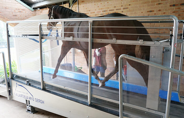 Horse Gym 2000 | Gallop Treadmill