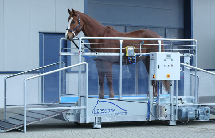 Horse Gym 2000 Treadmill for horses