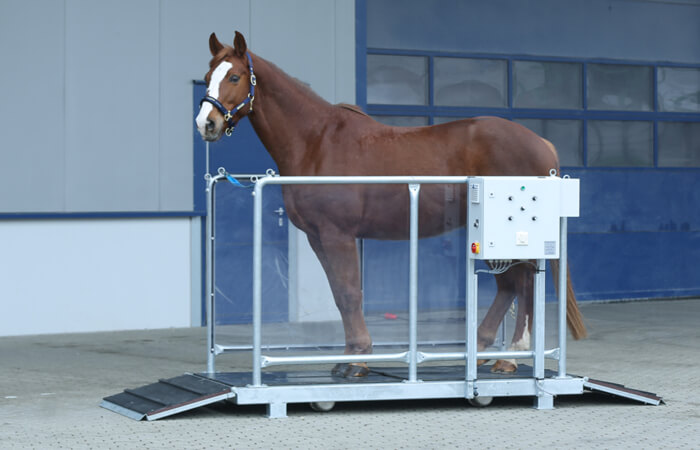 Horse Gym 2000 Vibratory Plate