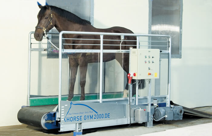 Horse Gym 2000 | Standard-Plus Model S2