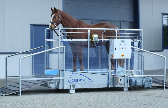 Horse Gym 2000 | Standard Automatic Model S3