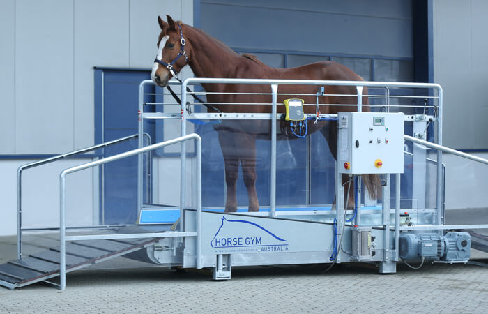 Horse Gym 2000 Trot Treadmill